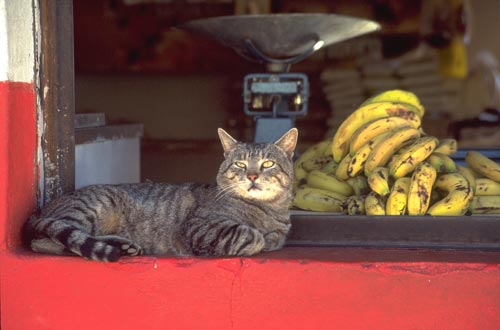 Cat and bananas, Alamos, Sonora, Mexico.  Photo by Anders Tomlinson.