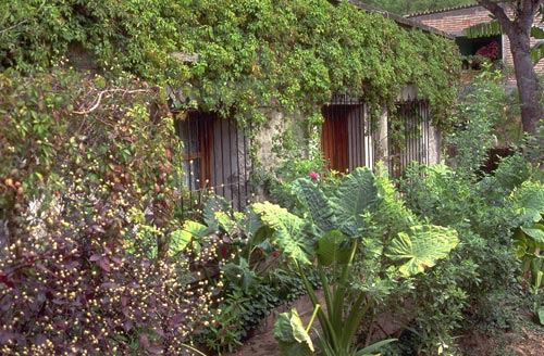 house covered with plants. Alamos, Sonora, Mexico.  Photo by Anders Tomlinson