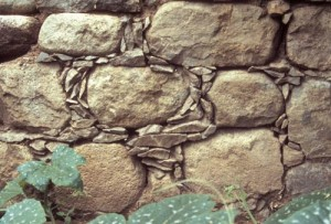 Old rock wall, Alamos, Sonora. mexico. Photo by Anders Tomlinson.
