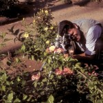 Antonio Figueroa photographing roses in the plaza, Alamos, Sonora, Mexico. Photo by Anders Tomlinson.