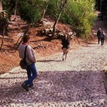 Crew walks to town from Puerta Roja, Alamos, Sonora, Mexico. Photo by unknown.