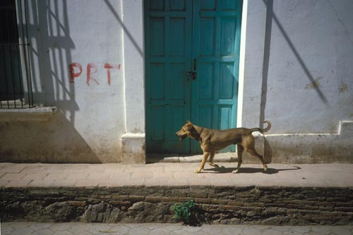 dog walking on side wals, Alamos, Sonora, Mexico,  Photo by Anders Tomlinson.