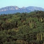 View of Sierra de Alamos from Rio Cuchujaqui, Alamos, Sonora, Mexico. Photo by Anders Tomlinson.