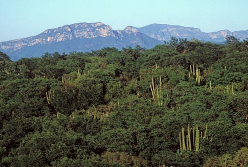 View of Sierra de Álamos from Rio Cuchujaqui, Alamos, Sonora, Mexico.  Photo by Anders Tomlinson.