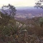 Atop Mt. Alamos looking north at Alamos, Sonora, Mexico. Photo by Anders Tomlinson.