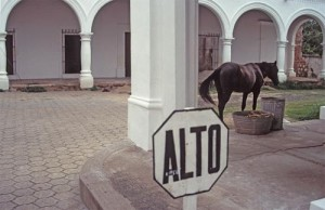 Horse near buckets of food scraps put out for trash pickup, Alamos, Sonora, Mexico. Photo by Anders Tomlinson.