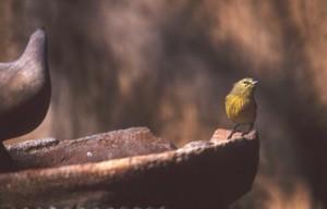 Bird bath at El Pedregal, Alamos Sonora, Mexico