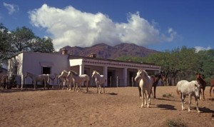 Horses in front of the main house on what is now Estancia Chrysalis.
