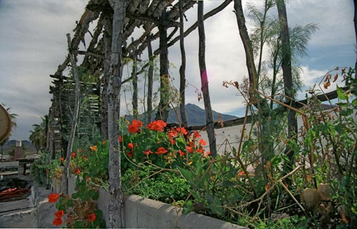 Flowers and Sierra de Alamos from Nuzum's roof garden, Alamos, Sonora, Mexico.  Photo by Anders Tomlinson.