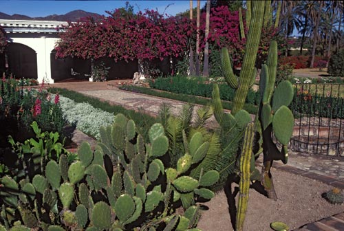 Cactus in the Jacoby garden, Alamos, Sonora, Mexico.  Photo by Anders Tomlinson.