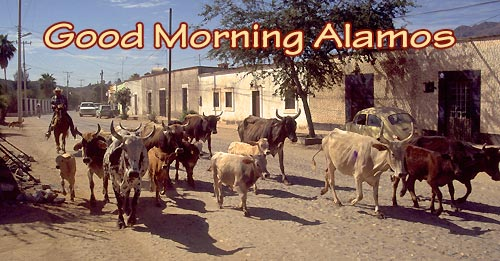 Herd of cows move through town, Alamos, Sonora, Mexico. Photo by Anders Tomlinson.