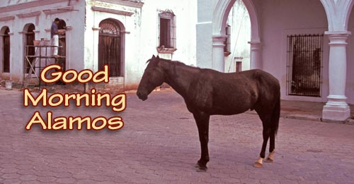 horse on calle comercio 2, alamos, sonora, mexico. photo by anders tomlinson.
