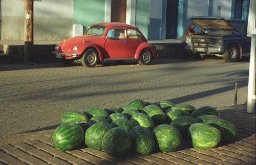 Alameda, £Alamos Sonora Mexico.  Photo by Anders Tomlinson.