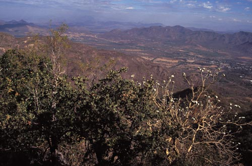 view of the western edge of alamos, sonora, mexico seen fro atop sierra de alamos in the spring, 1995.  photo by anders tomlinson