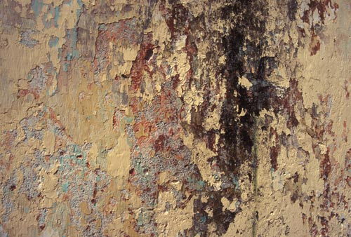 paints peeling on alamos, sonora,, mexico wall. photo by anders tomlinson