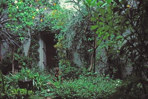 calle comercio 2, alamos, sonora, mexico.  casa nuzum, garden with pond, photo by anders tomlison
