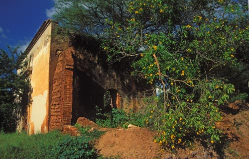 ruin of the house where actress maria felix was born in 1914.  alamos, sonora, mexico.  photo by anders tomlinson